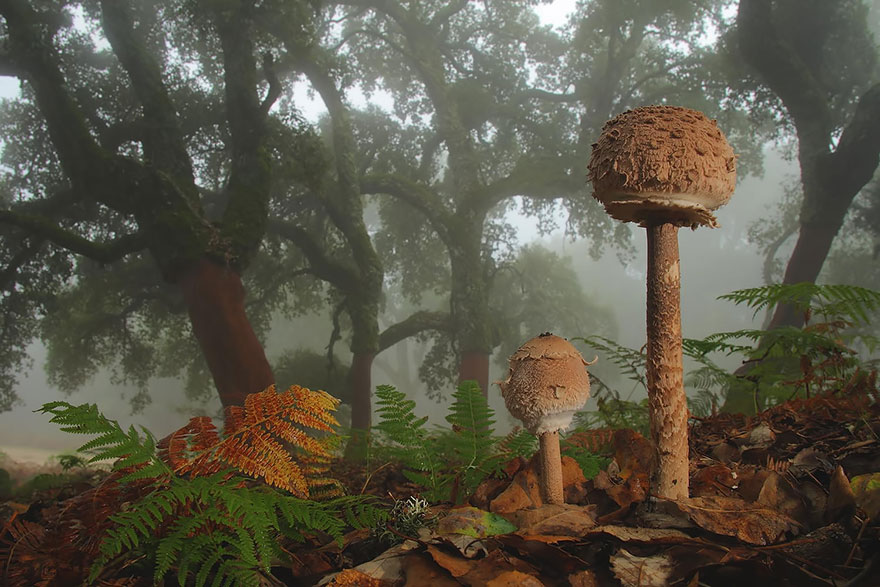 psychedelic mushrooms brown forest