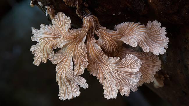 steve-axford-mushrooms-1.jpg.650x0_q70_crop-smart
