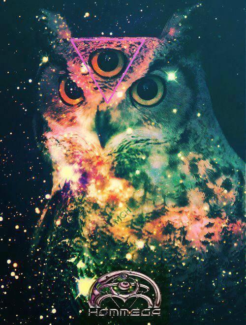 owl hommega